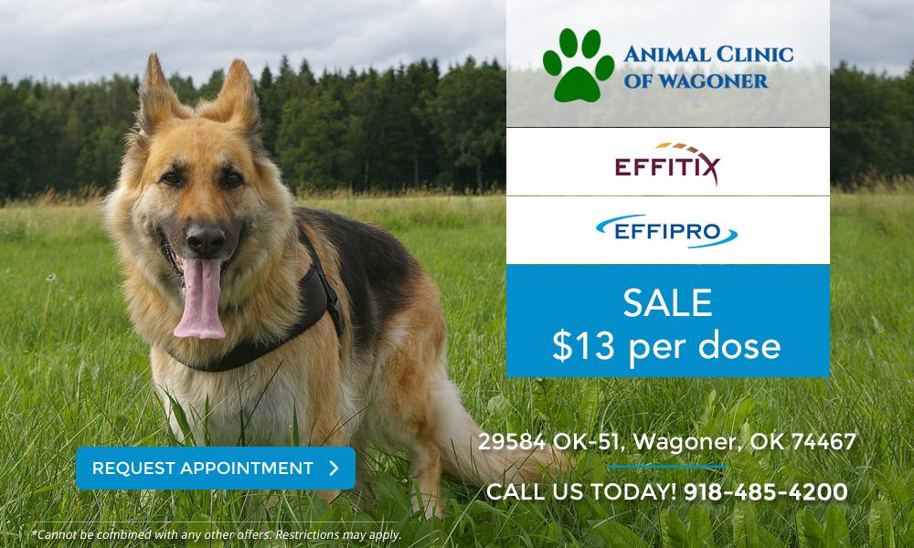 Animal Clinic of Wagoner_Effitix Effipro